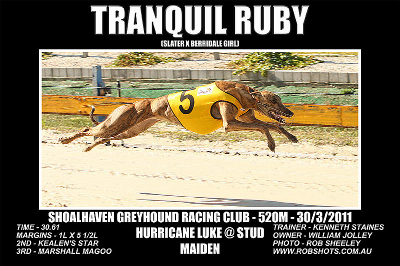 Nowra_280311_Race03_Tranquil_Ruby