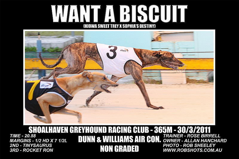 Nowra_280311_Race09_Want_A_Biscuit