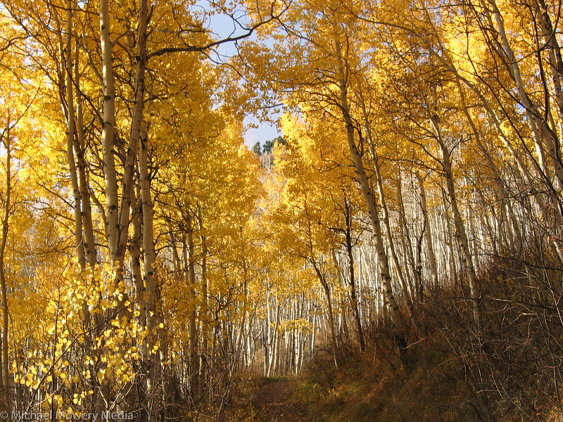 September: Golden Trail