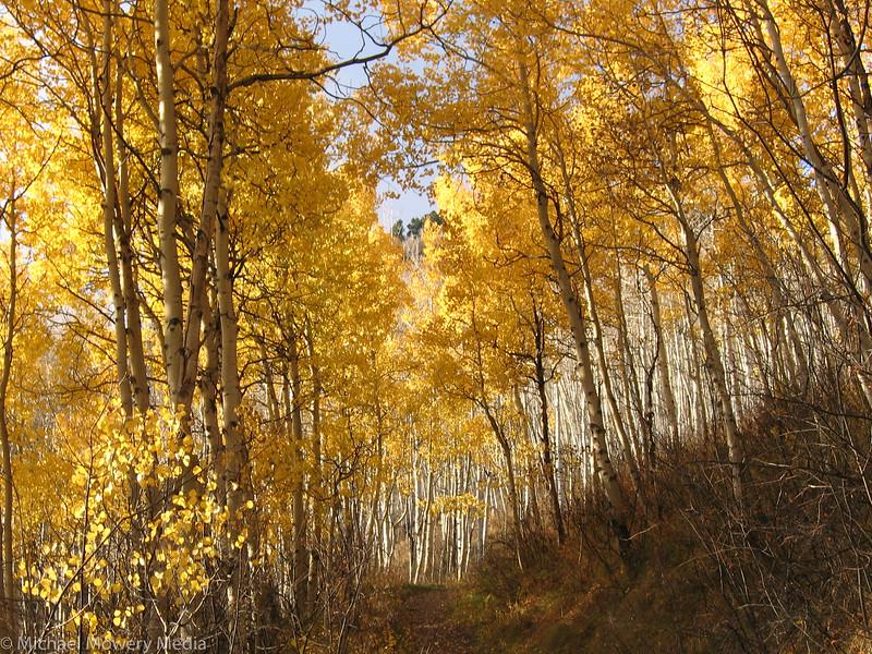 September: Golden Trail