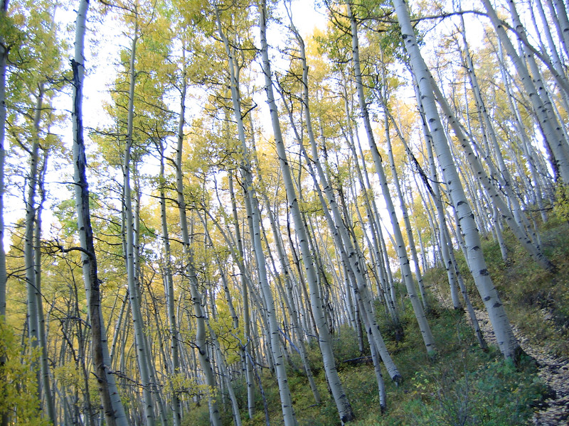 Climbing out of the Aspens to the top of the Jud