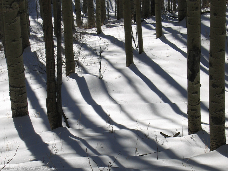 Long Shadows in the Aspens