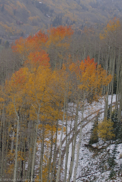 Taken from the Gondola, the tops of these aspens are on fire.