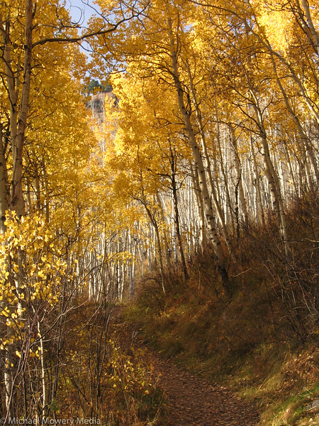 A few remaining Aspens on the Jud Wiebe trail