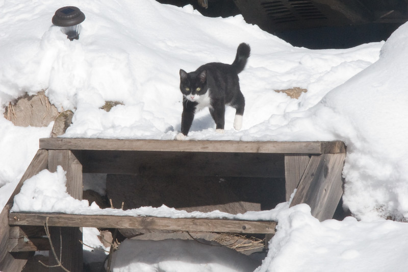 Salsa checking out this thing called snow