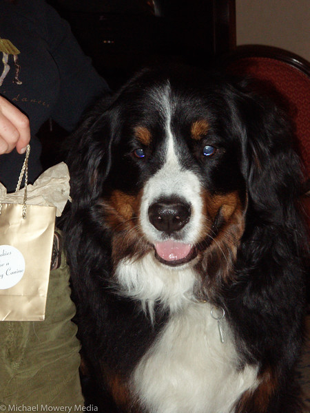 """Introducing the dogs to all the pet """"items"""" in the Broadmoor"""