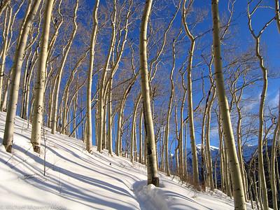 January: Winter Aspens