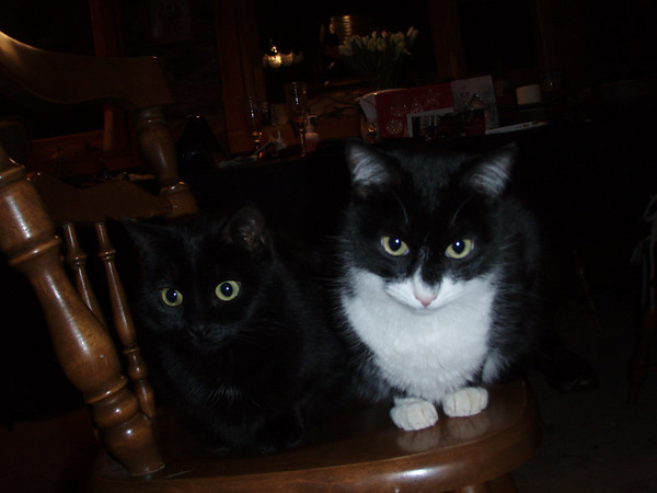 Salsa and Tango wishing every one a Happy New Year!