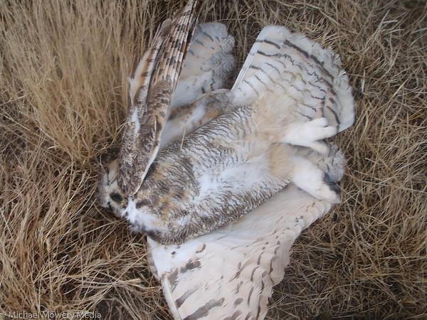 Poor owl got electructed