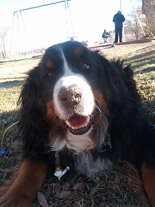 Smokie last day in the Park