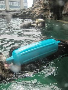 Alaska Cruise: Seattle Aquarium