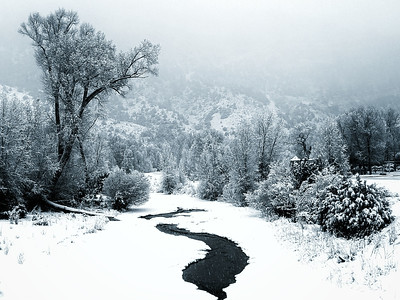 #snowing outside #cimarron #colorado #trees #river #photooftheday #day62