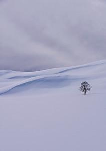 Lone Tree-Yellowstone 2017
