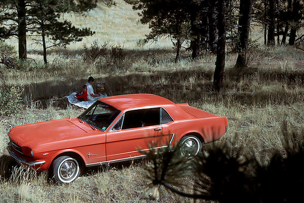 1964/09 - The Rockies:  James and Pat Grigsby strike a picnic pose while Murry climbed a large pine tree to get an overhead vantage point of them and the new Mustang.  Think what that car in pristine condition would be worth today?!