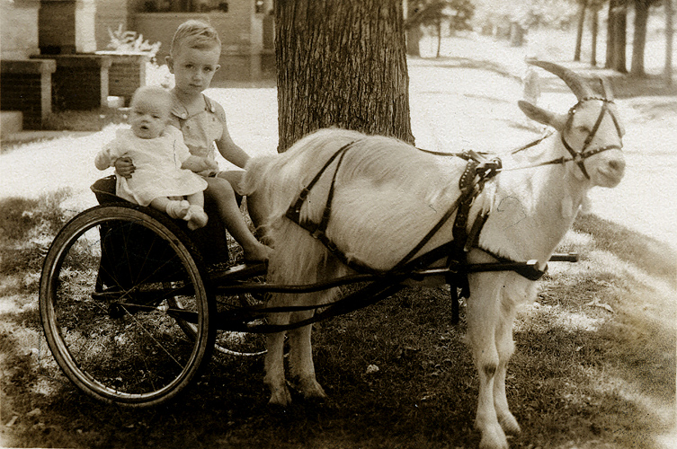 """1937/07 - Murry,Bill and goat.  An old sepia of the brothers Grigsby.  This picture was taken in front of 668 South Lincoln when Murry was 3 months old (Mom had written our ages, the address and the date of the photograph on the back of the photo) and Bill was 33 months.  We probably lived in this house when Murry was born at """"Denver General Hospital"""" at 6th Avenue and Bannock.  This house has been torn down now and serves as a parking lot for an adjacent apartment house."""