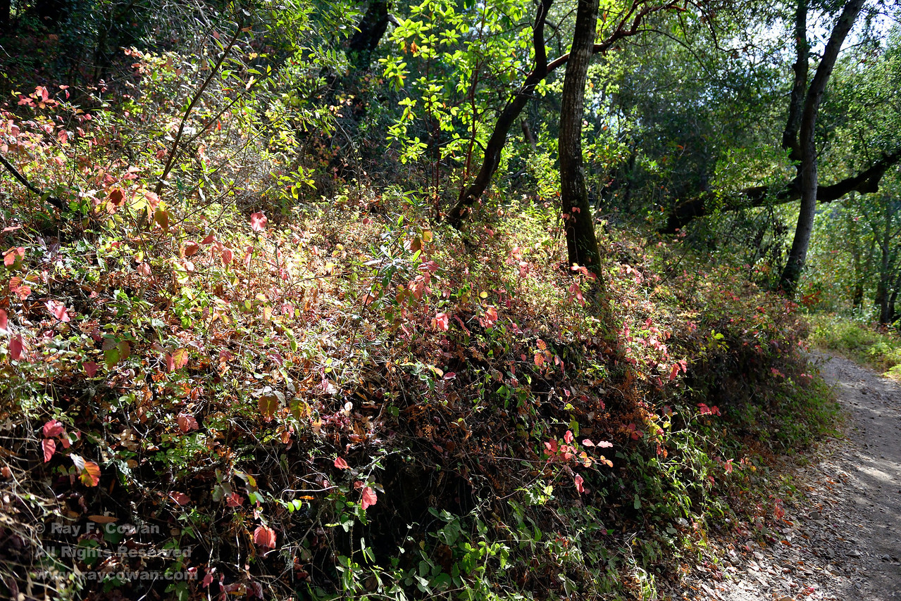 Hike on Limekiln Trail, Sierra Azul Open Space Preserve and Lexington Reservoir County Park, Santa Clara County, California