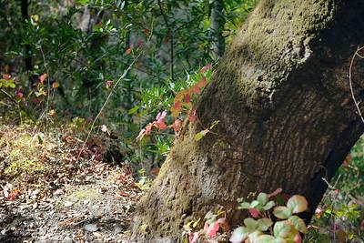 Hike on Limekiln Trail, Sierra Azul Open Space Preserve and Lexington Reservoir County Park, Santa Clara County, California