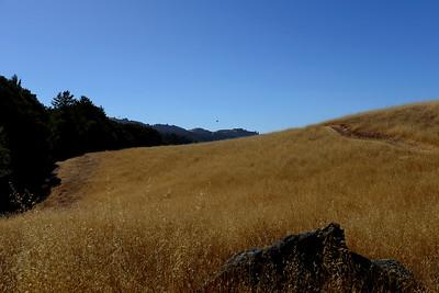 Hike at Los Trancos OSP, potluck dinner, and group photos.