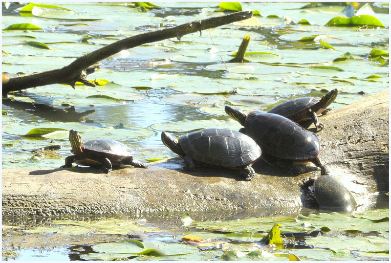 BOB WALLACE TURTLE PARTY