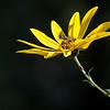 Greg Pickle - Spring Grove Nature Sanctuary-1