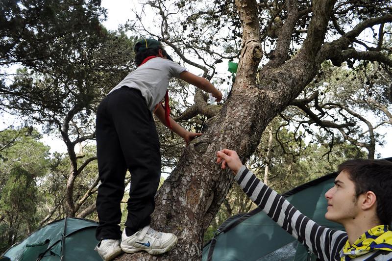 Seb...the Tree Climber!