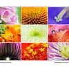 Macro World of Flowers