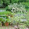 Stockbridge: Berkshire Botanical Garden: Toward Wishing Tree behind Visitor Center