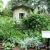 Stockbridge: Berkshire Botanical Garden: Martha Steward Garden: Toward shed