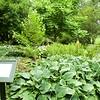 Stockbridge: Berkshire Botanical Garden: The Hosta Garden