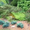 Stockbridge: Berkshire Botanical Garden: Top of Vista Garden: Low conifer rock area