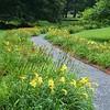 Stockbridge: Berkshire Botanical Garden: Daylily Borders