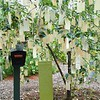 Stockbridge: Berkshire Botanical Garden: Wishing Tree with sign and mailbox for extra tags