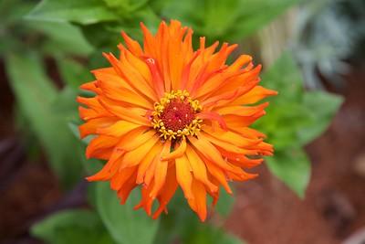 18 July Berkshire Botanical Garden