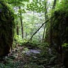 Sheffield: Bartholomew's Cobble: Cedar Hill Trail: Mossy cleft