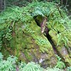 Sheffield: Bartholomew's Cobble: Cedar Hill Trail: Boulder with moss and ferns and small flowers