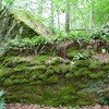 Sheffield: Bartholomew's Cobble: Cedar Hill Trail: Big Quartzite boulder with moss and ferns