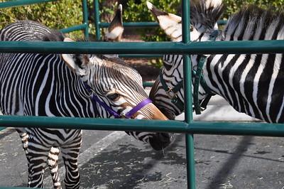 2. Zebras