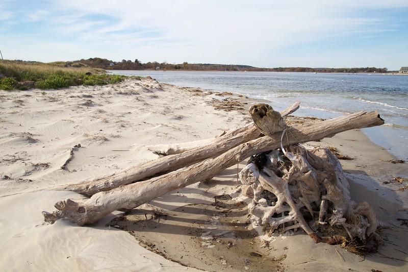 Crane Estate: Steep Hill Beach near Cedar Point: Driftwood pile, toward beached seal