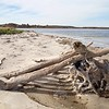 Crane Estate: Steep Hill Beach near Cedar Point: Driftwood pile, toward beached seal