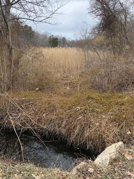 Rockport: Brook under Curtis Street into marsh near Pine Pit parking