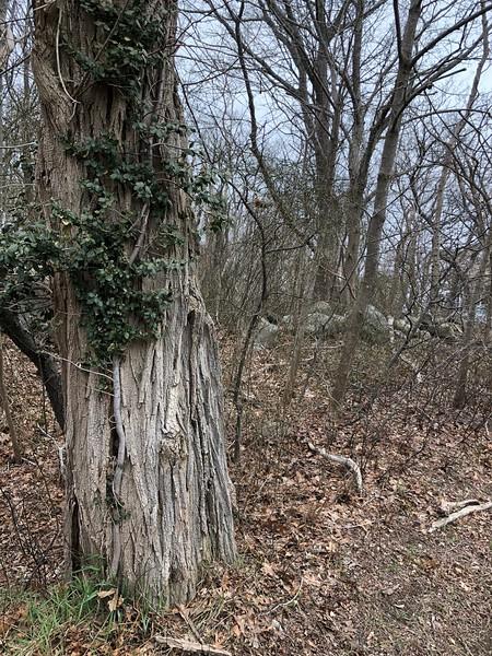 Rockport: Mass Audubon land: From parcel 9-48 toward 212 Granite Street