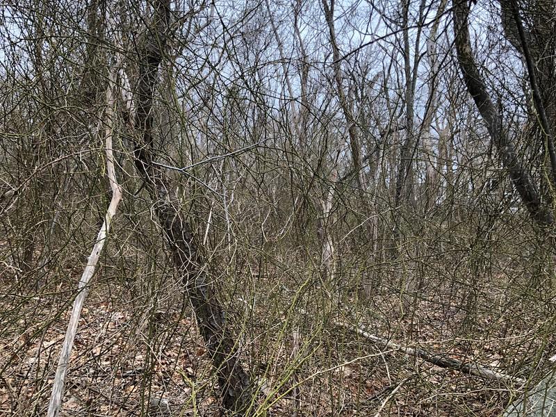 Rockport: Mass Audubon land: Parcel 8-1 from Granite Street