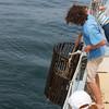 Schooner Ardelle: Raising lobster trap