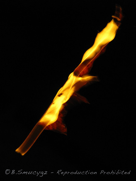 It looks like fire, but it's actually an oak leaf that was hanging by one end from a spider web and twisting in a slight breeze, I was playing around with different camera settings and took nearly 100 shots, this was one of my favorites (no pp).