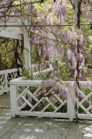 LDAC Kappa Luau 2009 - Vines Botanical Gardens