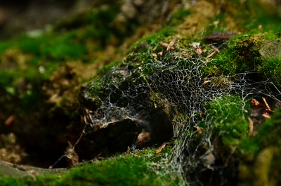 Spider web + moss - Jareds