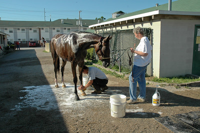 A cooling bath on a hot day at the track