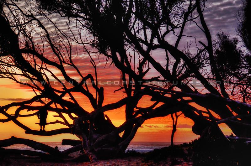 sunset-tree_7217