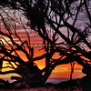 sunset-tree_7217