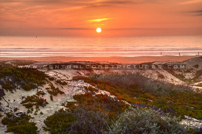 grover-beach-dunes-sunset_9616